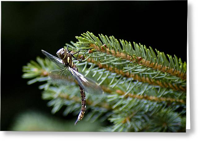 Hanging Around-fawn Darner Greeting Card