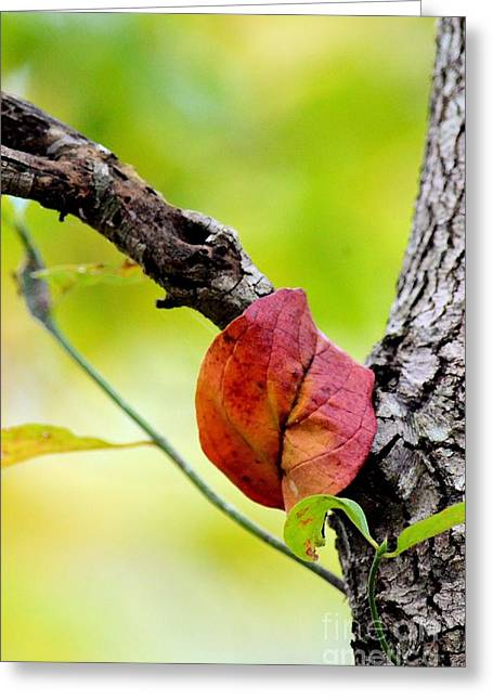 Hanging By A Limb Greeting Card by Maria Urso