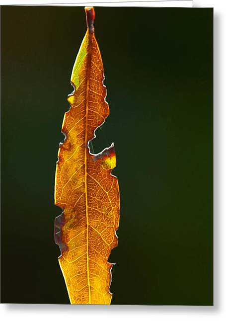 Hanging By A Thread Greeting Card by Don Durfee