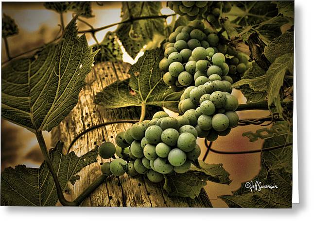 Hanging On A Vine Greeting Card by Jeff Swanson