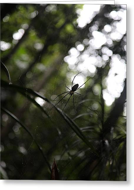Hanging Spider Greeting Card