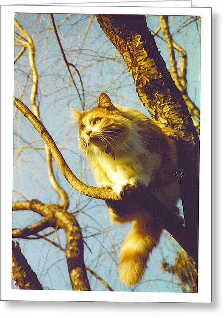 Hanserelli In Tree Greeting Card by Barbara McGeachen