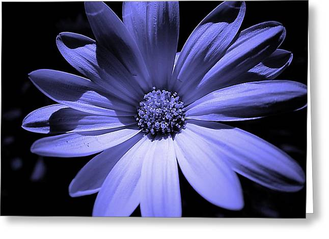 Happy African Daisy In Blue Greeting Card by Beth Akerman