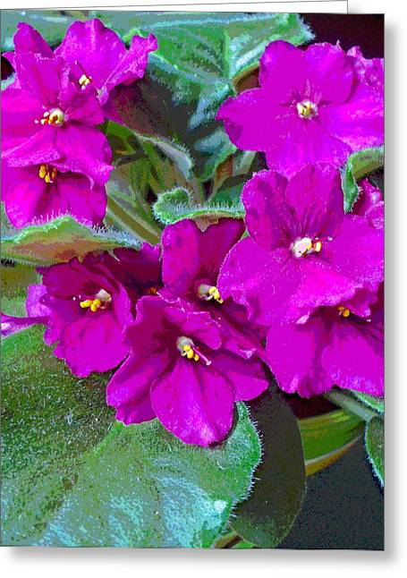 Happy African Violet Greeting Card by Padre Art