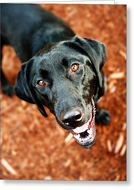 Happy Black Labrador Dog Outside Greeting Card by Anna Hoychuk
