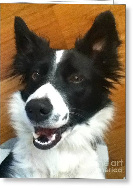 Happy Dog Greeting Card by Nicole Bibbens