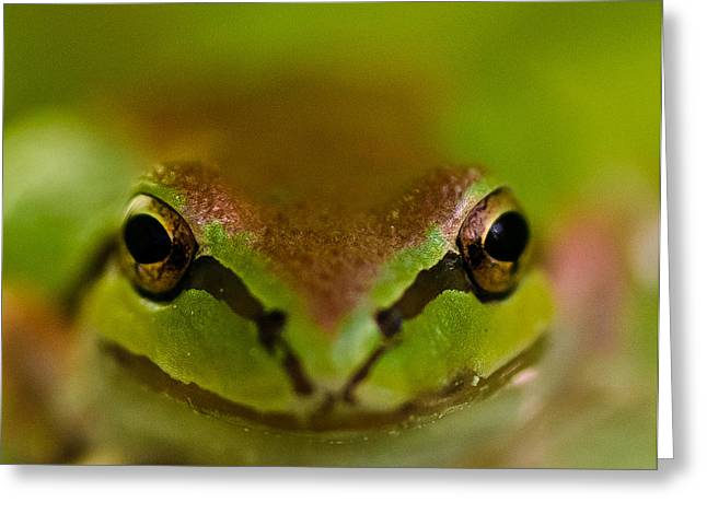 Happy Frog Greeting Card