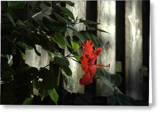 Happy Hibiscus Greeting Card by Al Cash