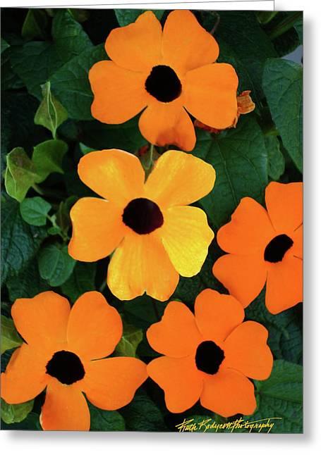 Happy Orange Greeting Card by Ruth Bodycott
