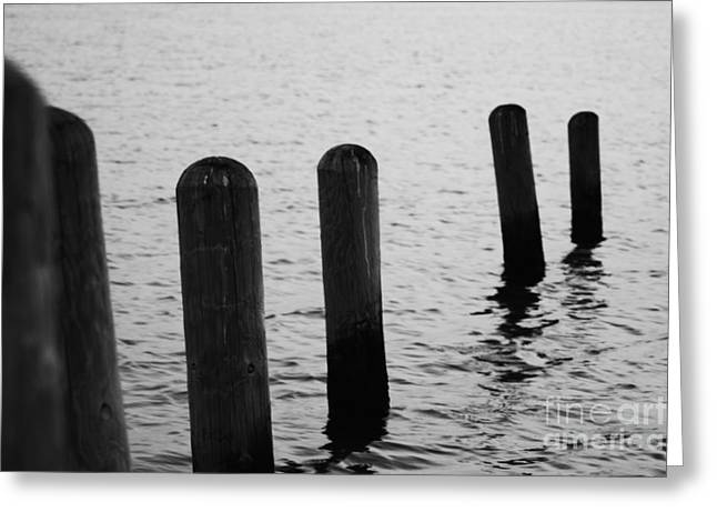 Greeting Card featuring the photograph Harbor Ties by Tony Cooper