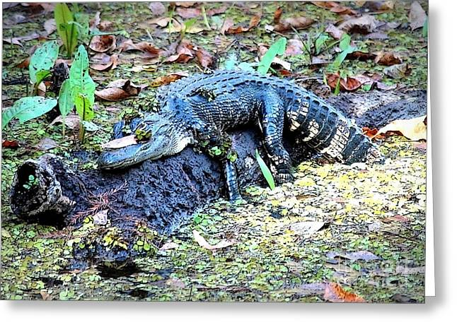 Hard Day In The Swamp - Digital Art Greeting Card by Carol Groenen