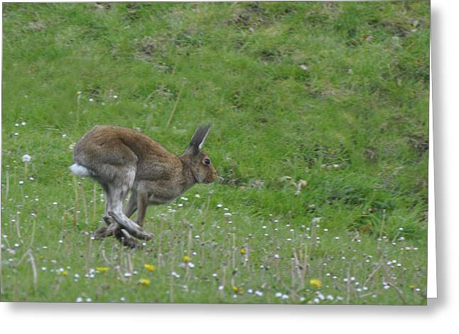 Hare I Come Greeting Card