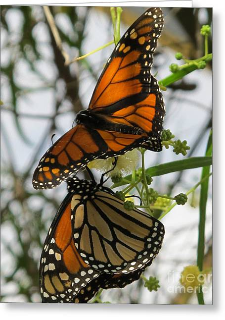 Greeting Card featuring the photograph Harmony by Leslie Hunziker