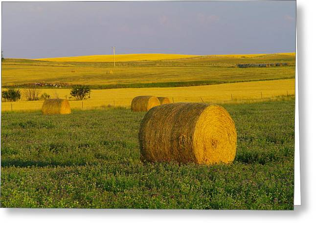 Harvest In Montana Greeting Card by Jeff Swan