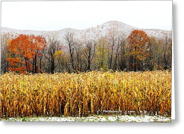 Harvest Snow Greeting Card by Carolyn Postelwait