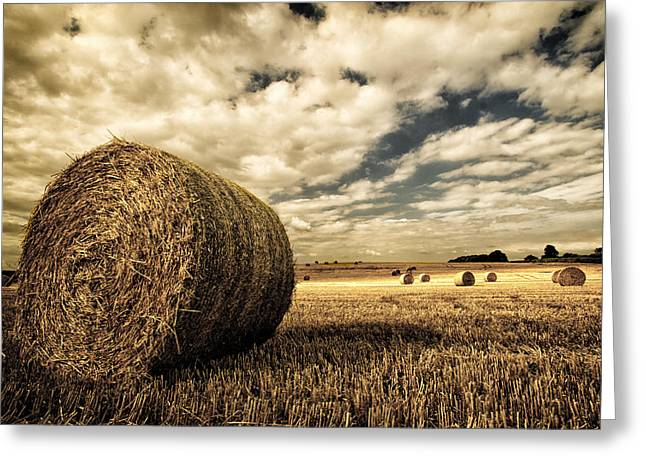 Harvest Time Greeting Card by Rick Parrott