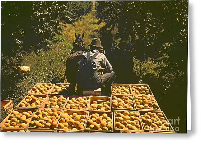 Hauling Crates Of Peaches Greeting Card