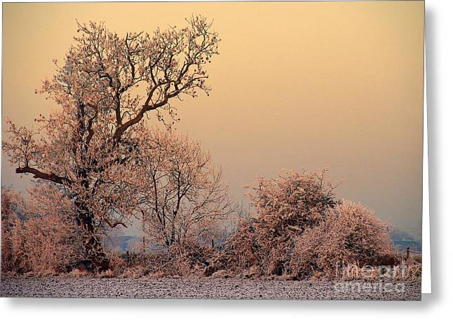 Greeting Card featuring the photograph Frost 2 by Linsey Williams