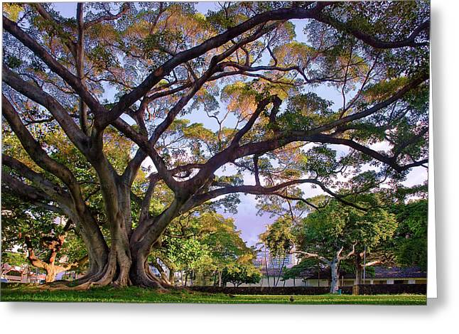 Hawaii Tree Greeting Card by Dave Dilli