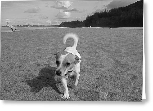 Hawaiian Beach Dog Greeting Card