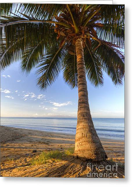Hawaiian Coconut Palm Sunrise Greeting Card