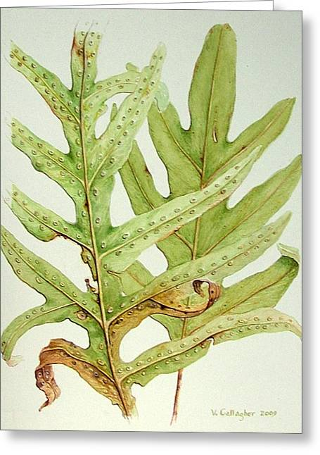 Hawaiian Lauae Ferns Greeting Card by Vincent Callagher