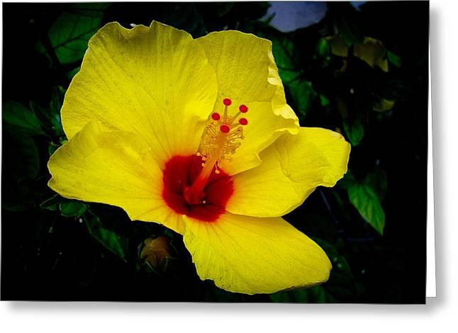 Hawaiian Yellow Hibiscus Greeting Card by Athena Mckinzie