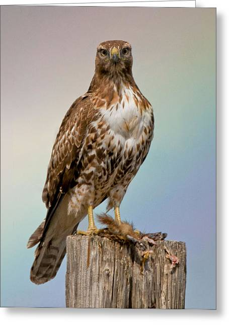 Hawk And Rainbow Greeting Card