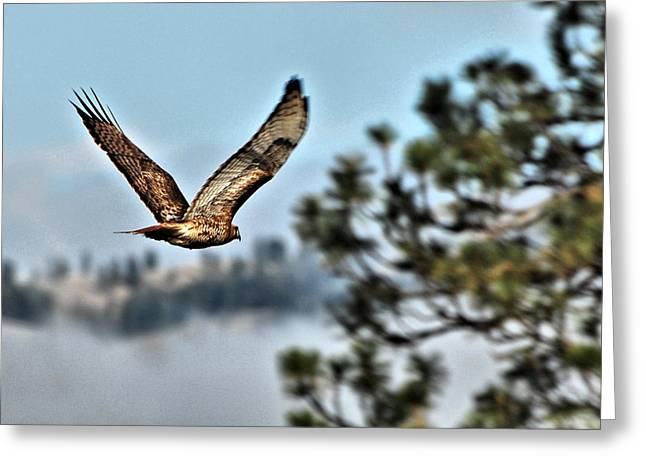 Hawk In Flight Greeting Card by Don Mann