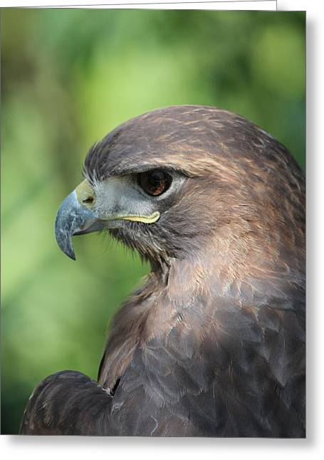 Hawk Profile Greeting Card by Alexander Spahn