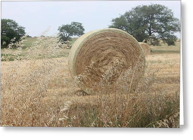 Hay Days In Texas Greeting Card by Shawn Hughes