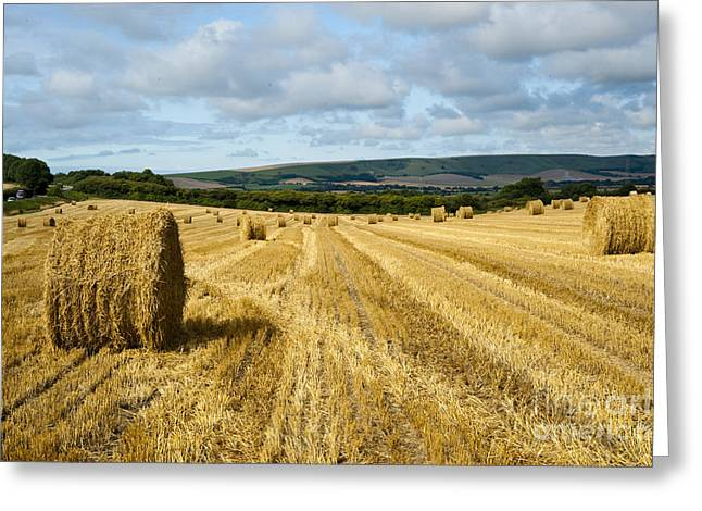 Hay Field Greeting Card by Donald Davis