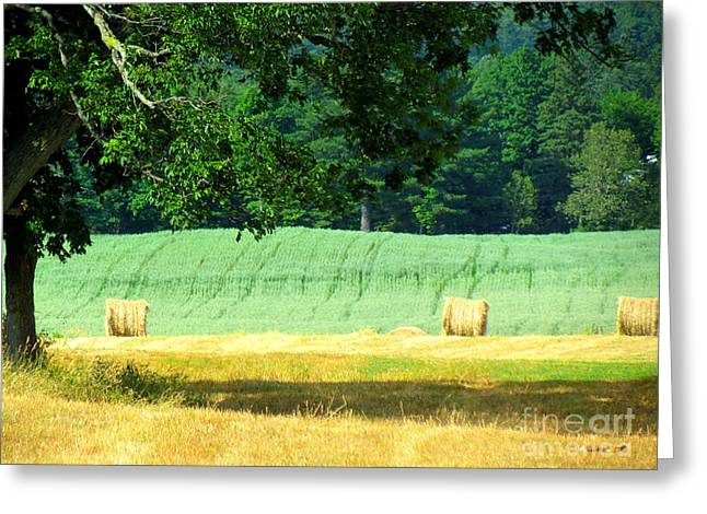 Greeting Card featuring the glass art Hay Landscape by France Laliberte