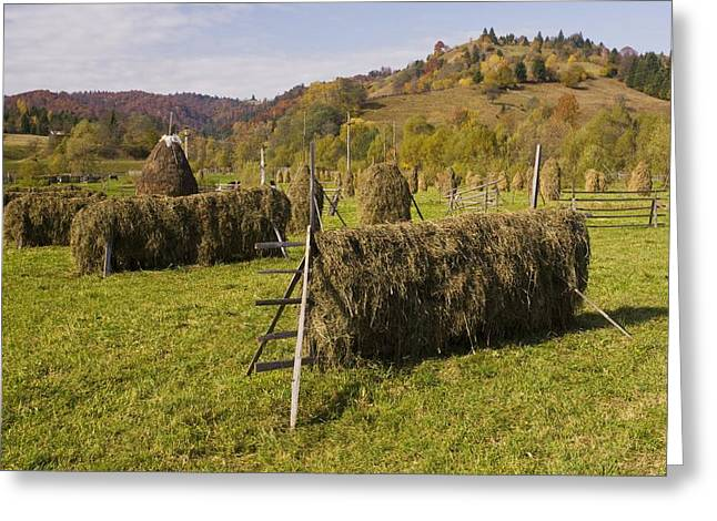 Hay Racks And Stooks, Romania Greeting Card by Bob Gibbons