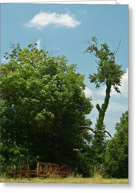 Hayrake In The Woods Greeting Card by Douglas Barnett