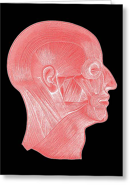 Head Muscles Greeting Card by Mehau Kulyk