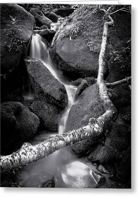 Headwaters Greeting Card