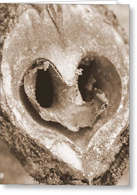 Heart Center Of A Walnut Shell Greeting Card by Maureen  McDonald