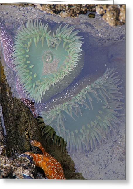 Heart Of The Tide Pool Greeting Card by Mick Anderson