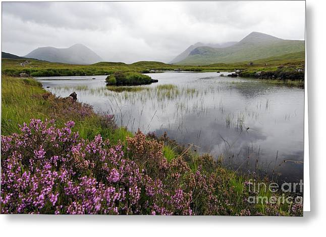 Heather And Mist On Rannoch Moor - D002270 Greeting Card by Daniel Dempster