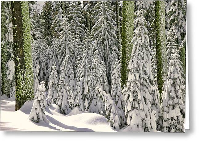 Heavy Snow Greeting Card by Garry Gay