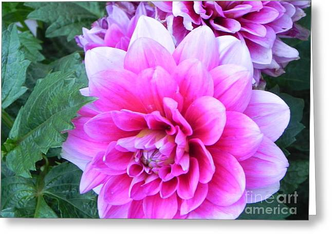 Hello Dahlia Greeting Card