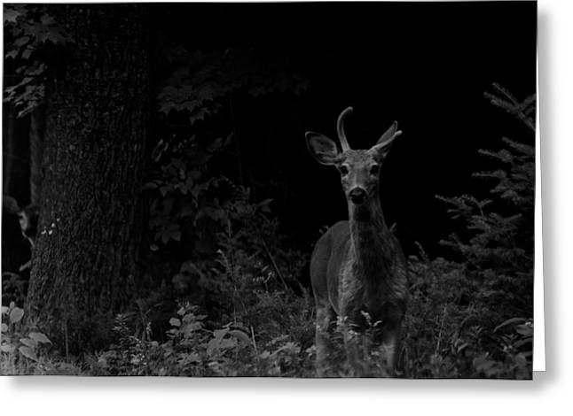 Greeting Card featuring the photograph Hello Deer by Cheryl Baxter