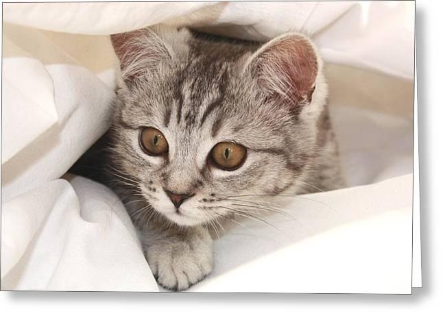 Hello Kitten Greeting Card by Claudia Moeckel