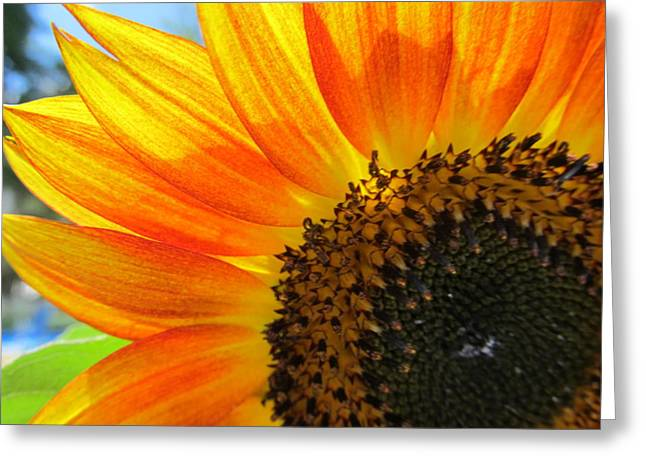 Greeting Card featuring the photograph Hello Sunflower by Tina M Wenger