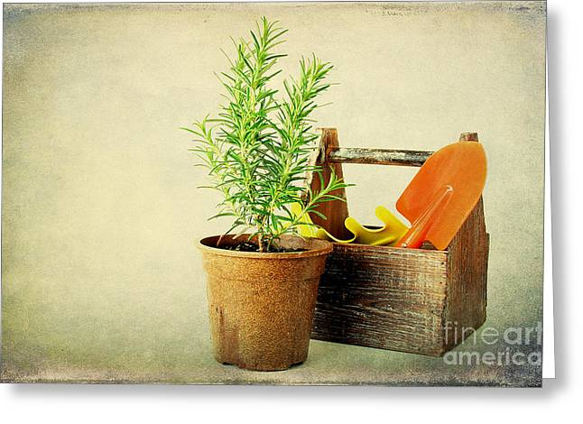 Herbs Greeting Card by Darren Fisher