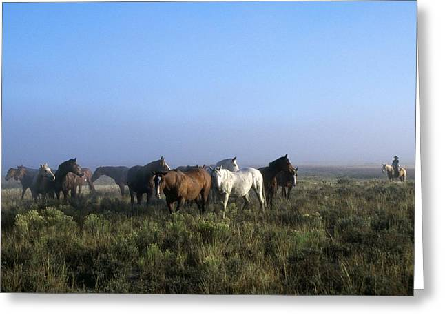Herd Of Horses And Cowboy On Horseback Greeting Card by Natural Selection Craig Tuttle