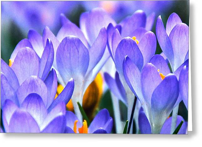 Here Come The Croci Greeting Card by Byron Varvarigos