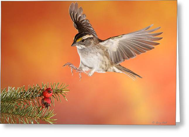 Greeting Card featuring the photograph Here I Come by Gerry Sibell