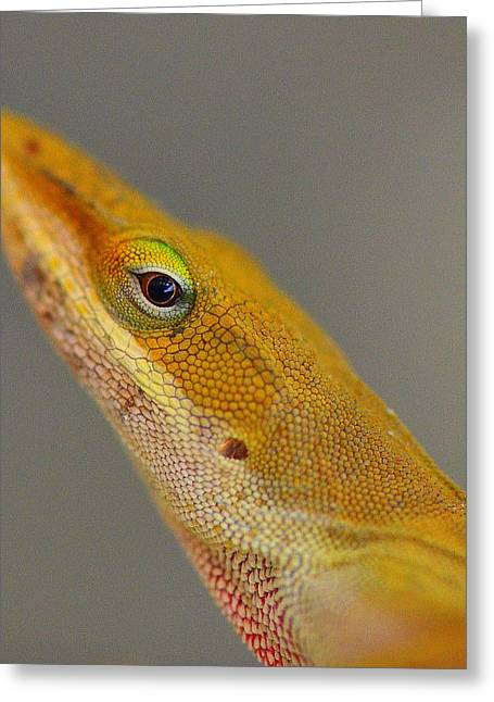 Greeting Card featuring the photograph Here Lizard Lizard by Tanya Tanski